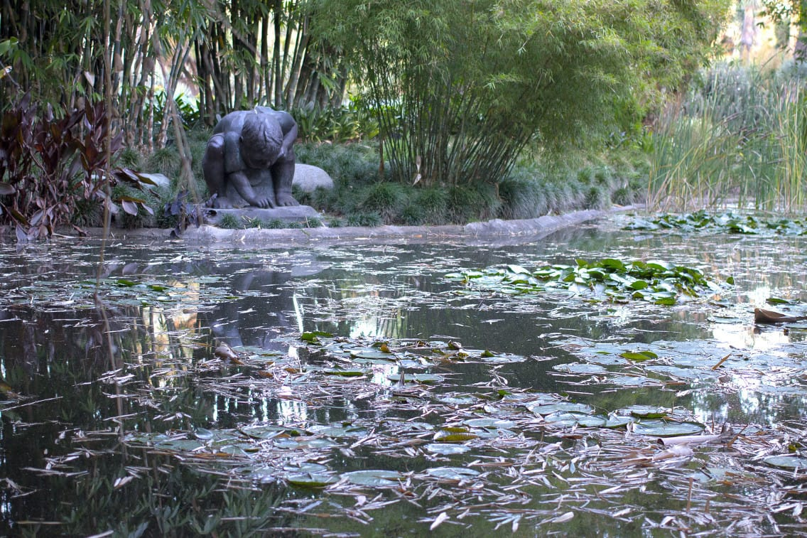 Huntington Library - lily pond